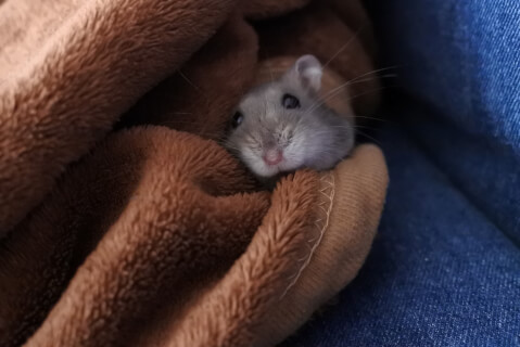 hamster_blanket