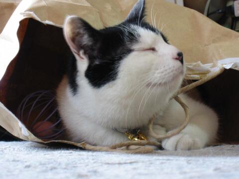 happy_cat_in_paper_bag