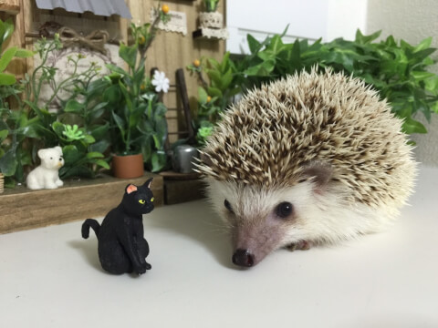 ハリネズミと黒猫のフィギュア