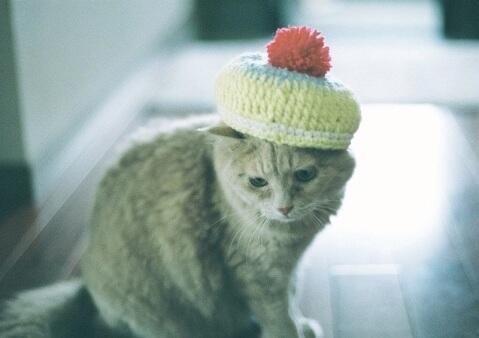 hat_cat
