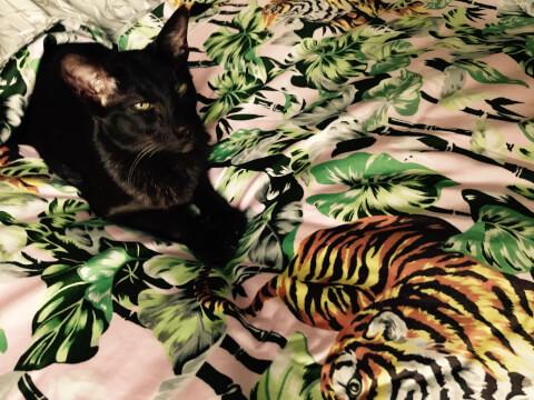トラが描かれた敷物とハバナブラウン