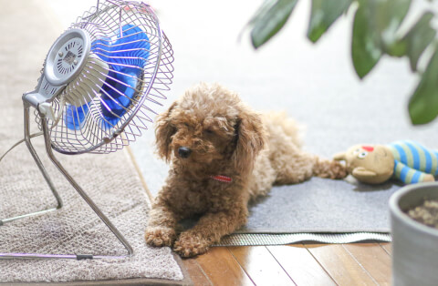 室内暑さ対策
