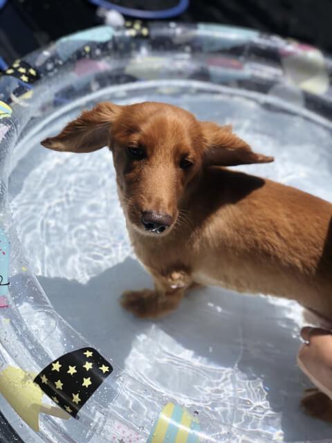 プールに入る犬