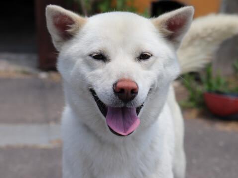 dog 北海道犬