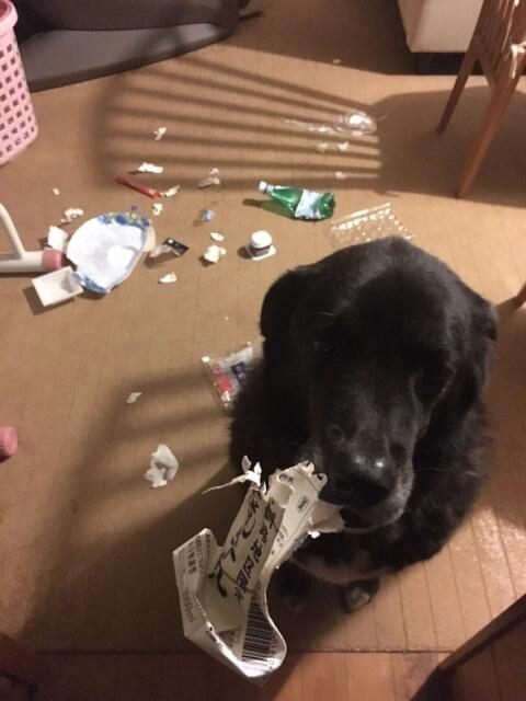 ゴミを かじる犬