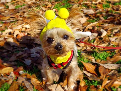 ハチの服を着た犬