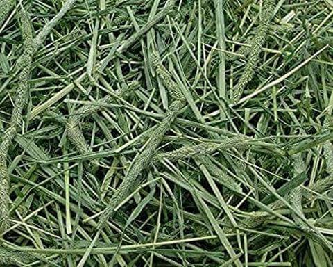 horse-grass