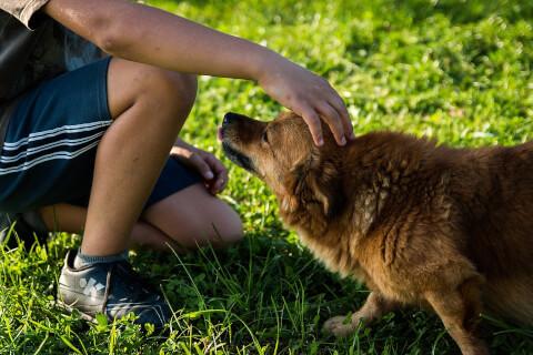 犬に触れる