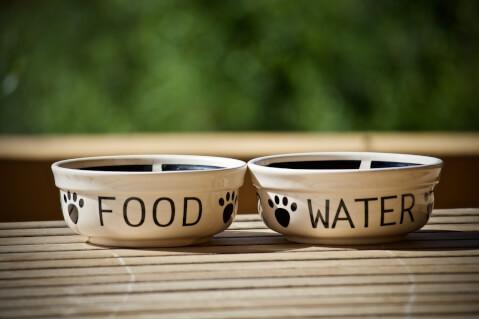 犬のご飯の皿