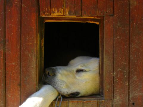 紀州犬の飼育に必要なもの