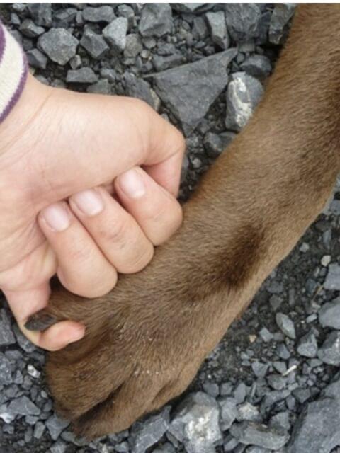 犬とゆびきり