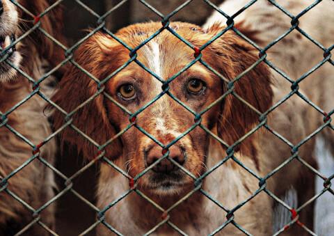 保護犬のイメージ