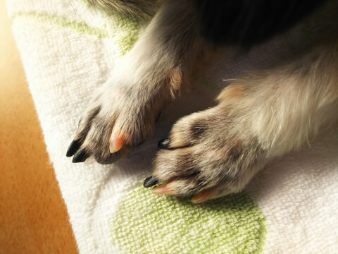 犬の前足アップ