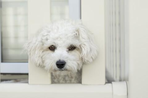 柵から顔を出す犬