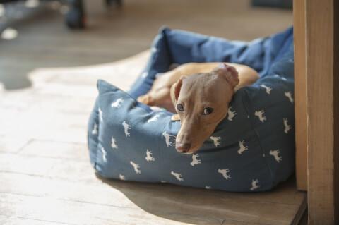 ベッドでくつろぐ犬
