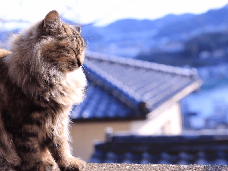猫 飼い たい