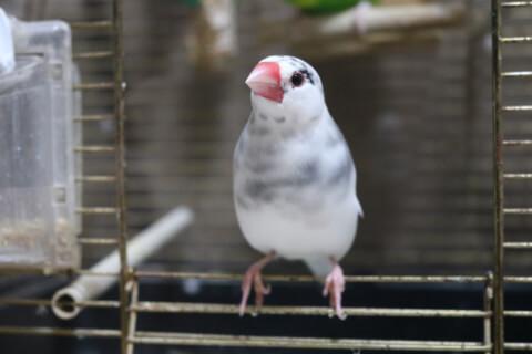 文鳥 小動物 ペット
