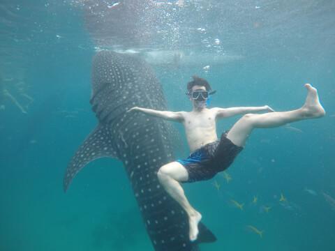 ジンベエザメと泳ぐダイバー
