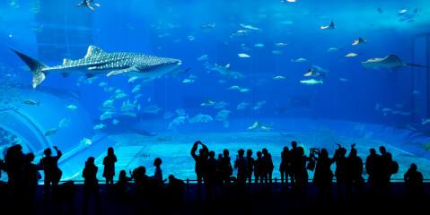ジンベイザメの水槽