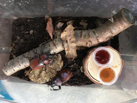 カブトムシ飼育ケース