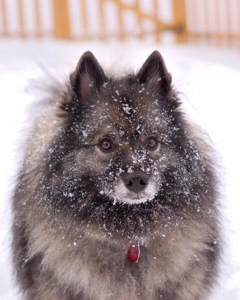 雪の中にいるキースホンド