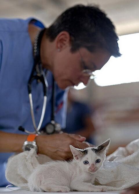 kitten-doctor