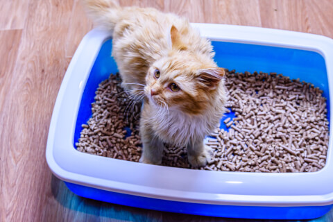 子猫の便秘の原因や対処、病気の可能性