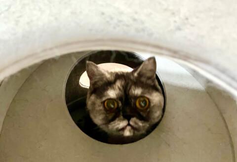 穴から顔を出す猫