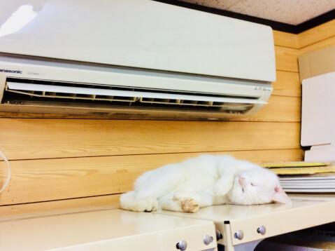 猫 クーラー 空調 エアコン