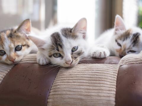 猫 子猫 兄弟 留守番