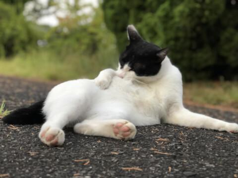 lick_cat