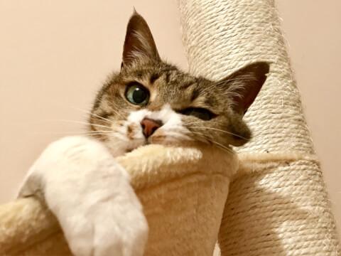 キャットタワー 室内 猫