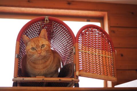 猫 キャリーケース 移動