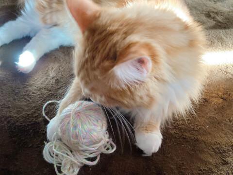 猫 一人あそび 毛糸ボール