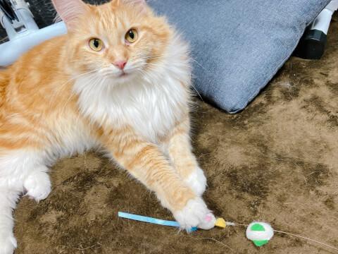 猫 おもちゃ 遊びたい