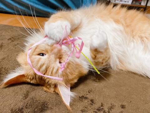 猫 リボン おもちゃ