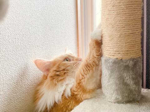 爪とぎ 猫