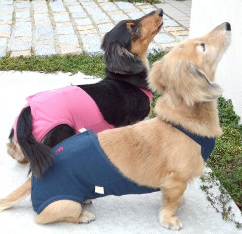 manner_guard_dog