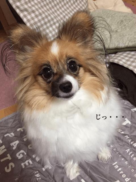 犬_あるある_動物_ドッグ_日常_習慣_性格_画像_まとめ