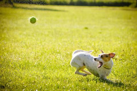 犬の口臭改善