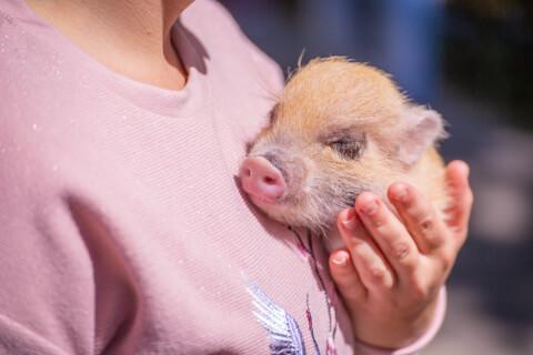 ミニブタ 性格 大きさ 飼育 ペット エサ 値段