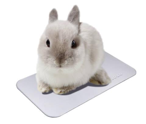 ウサギ用クールプレート