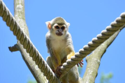 monkey_cage