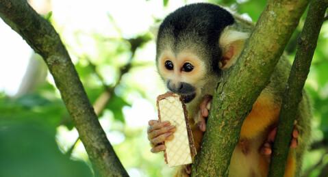 猿 種類 飼い方 ペット 知能