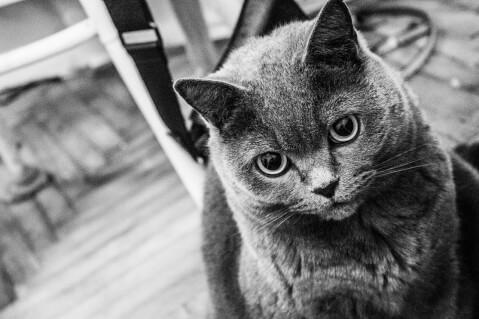 モノクロ猫