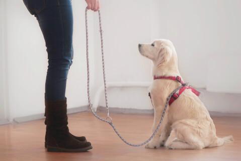 犬 マウンティング 人の足 しつけ 去勢 オス メス