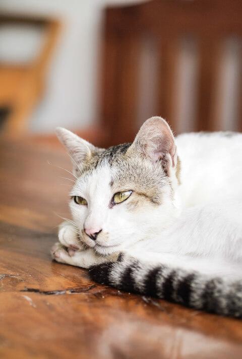 猫の体臭が臭い2