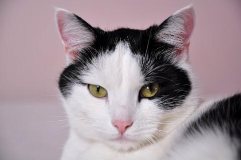 猫の体臭が臭い5