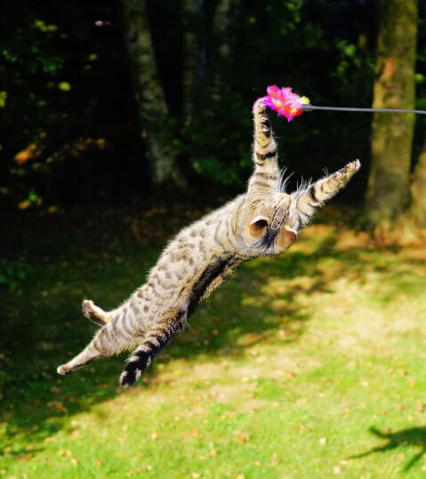 猫じゃらし おもちゃ 猫 人気 食べる