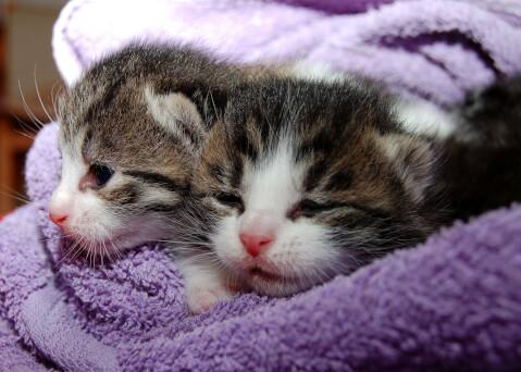 猫 タオル